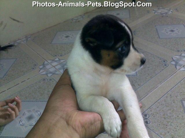 http://2.bp.blogspot.com/-zb8PNeCLQjk/Tg2q8_qXDaI/AAAAAAAABgQ/3eQzk0DMM3w/s1600/Puppies%2B3%2Bweeks%2Bold_0001.jpg