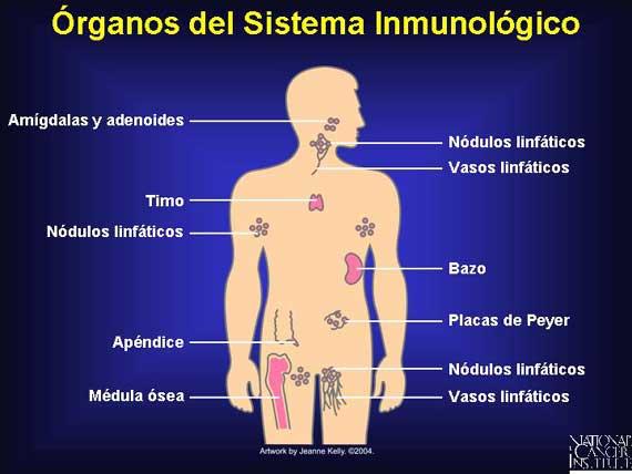 Vivianayoga yoga y sistema inmunologico - Alimentos sistema inmunologico ...