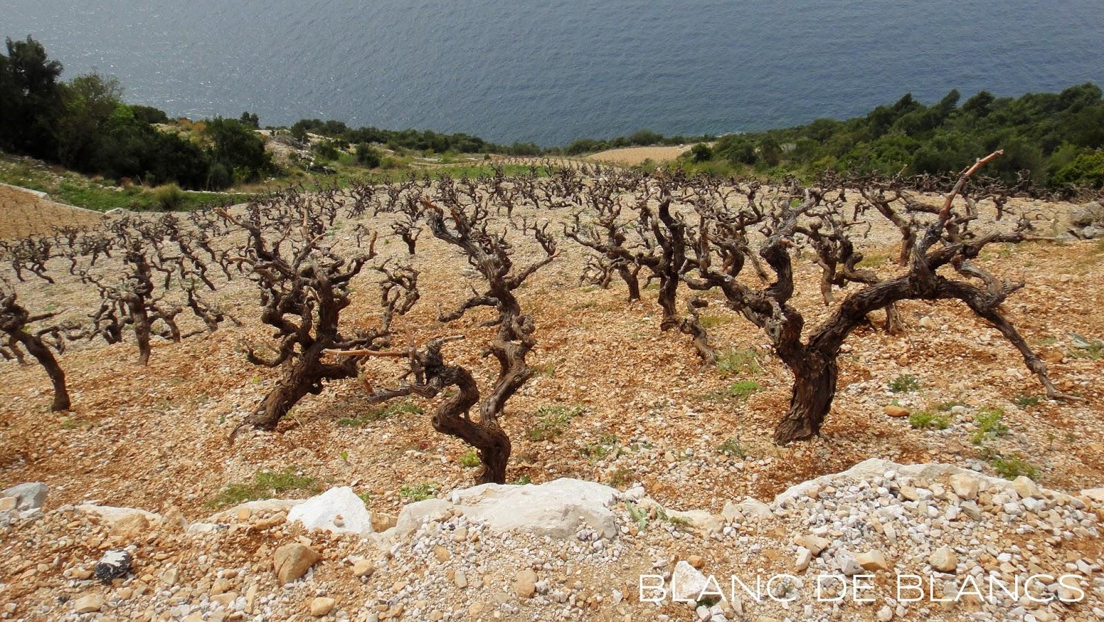Istria, Peljesac peninsula - www.blancdeblancs.fi