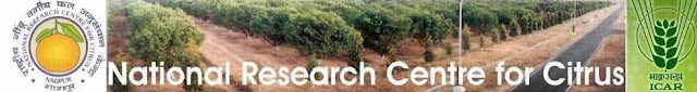 WALK IN INTERVIEW AT NATIONAL RESEARCH CENTRE FOR CITRUS ON 18TH JANUARY 2014