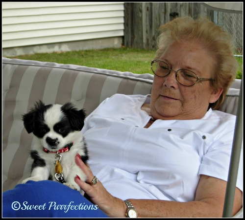Grandma Faye and Bandit in the Swing #ShedHappens