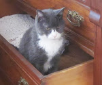 Buster in a drawer of an antique chest :-)