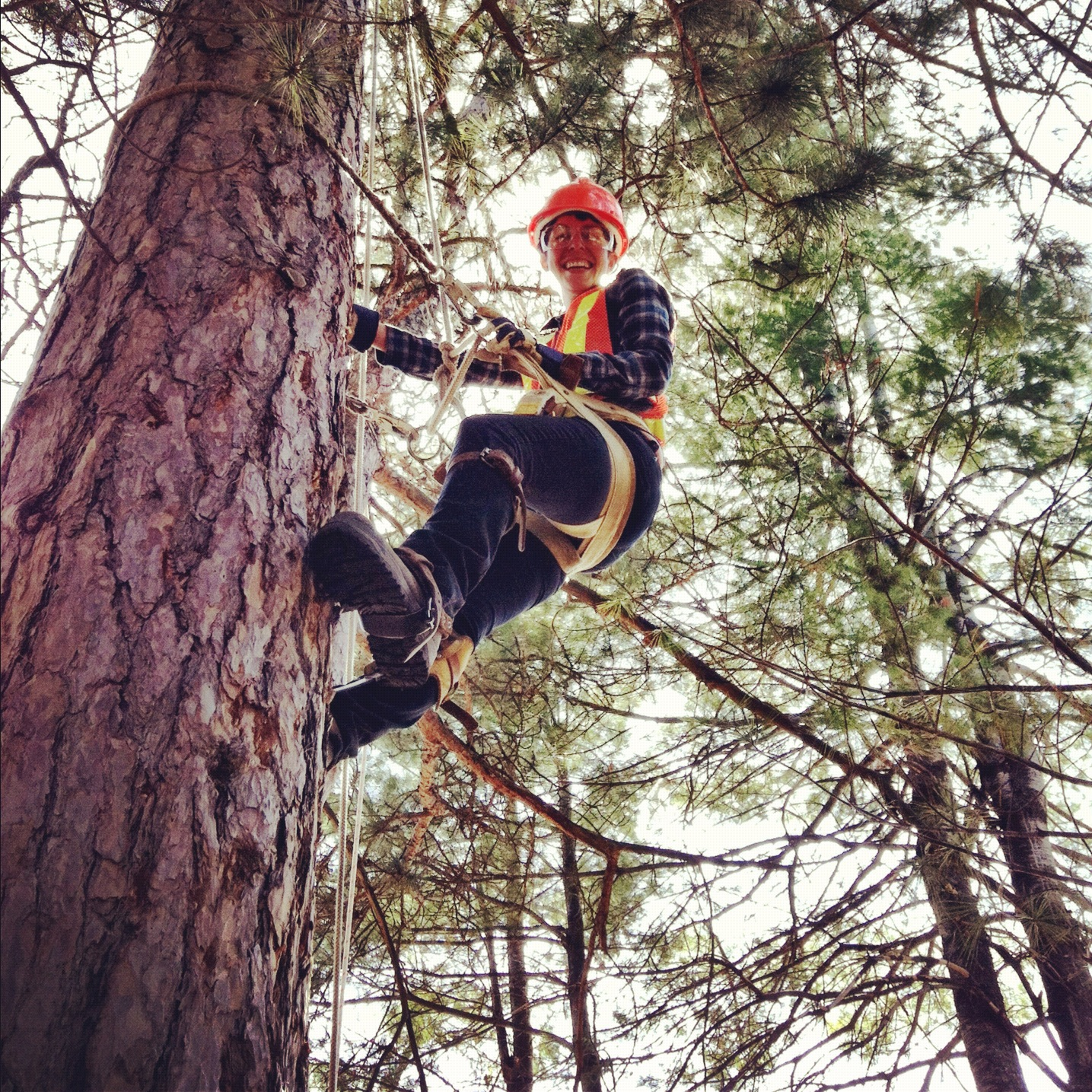 how to become a forestry technician