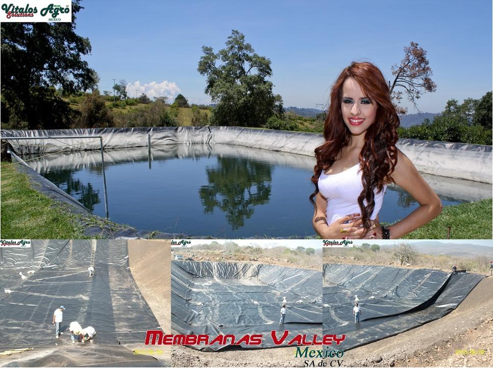 Viveros de aguacate hass diciembre 2012 for Viveros en jalisco