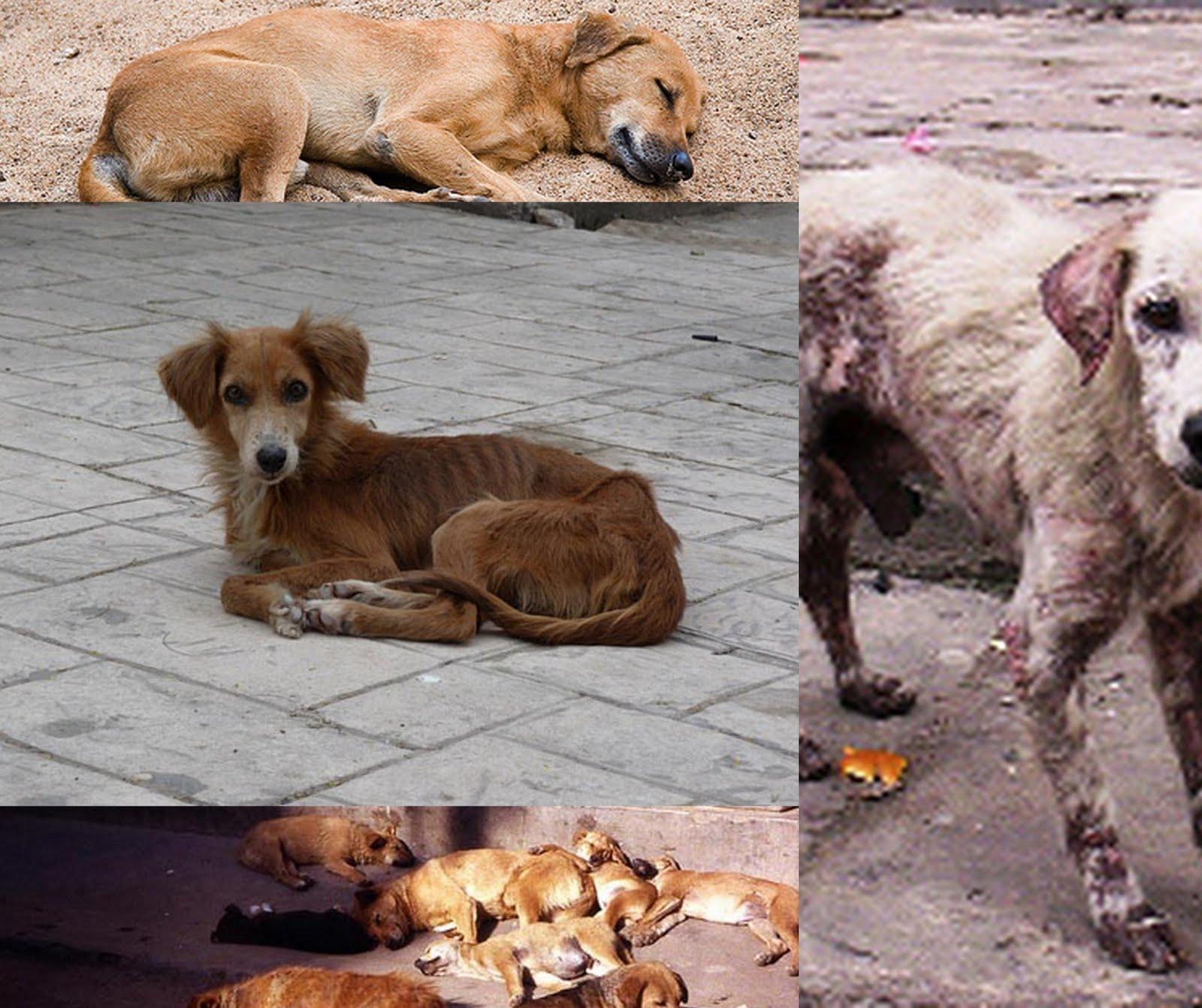 Αποτέλεσμα εικόνας για Κακοποίηση ζώων