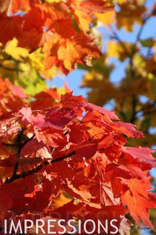 bunt leuchtendes Herbstlaub
