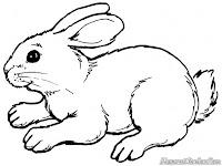 Bunny Si Kelinci