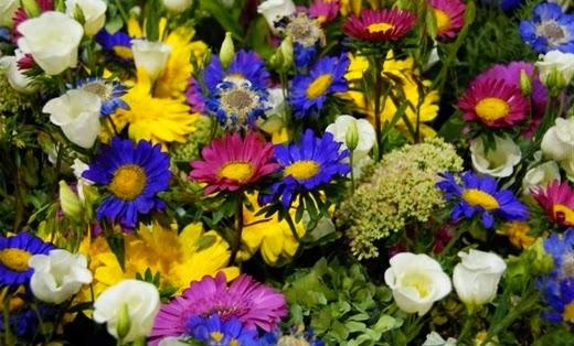 relación seres humanos flores