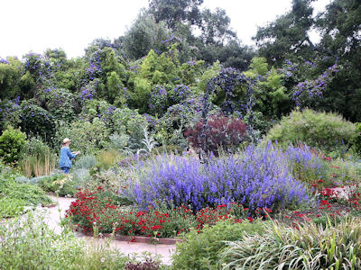The Herb Gardener Herbs in the Garden – Decorative Herb Garden