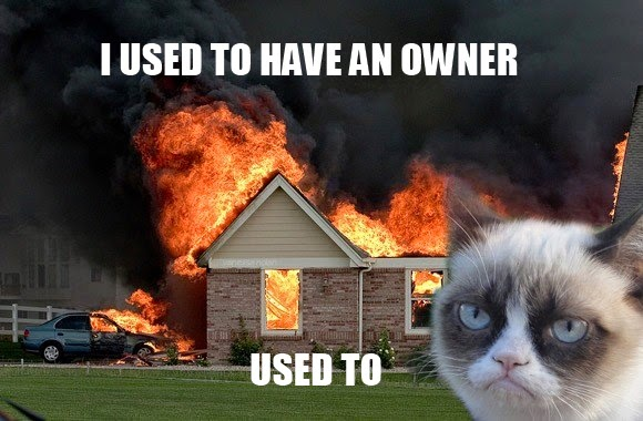 grumpy cat jokes,joke made by a cat
