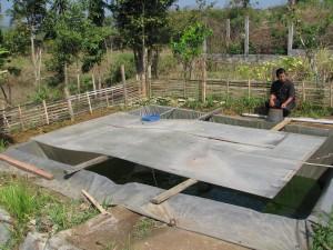 contoh kolam budidaya pembesaran lele