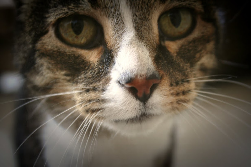 extreme close up of our cat, you can see each individual whisker