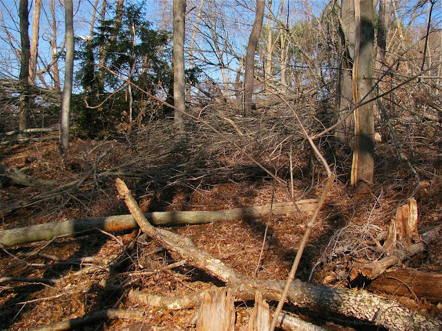 Hurricane-Sandy's-Destruction-in-Cold-Spring-Harbor-at-Uplands-Farm-Nature-Sanctuary