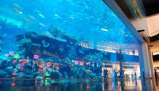 10 akuarium terbesar dan terbaik di dunia