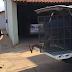 Preso suspeito de chacina que matou quatro pessoas em Madeiro do Piauí