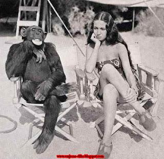 Lude slike, majmun,  i treba