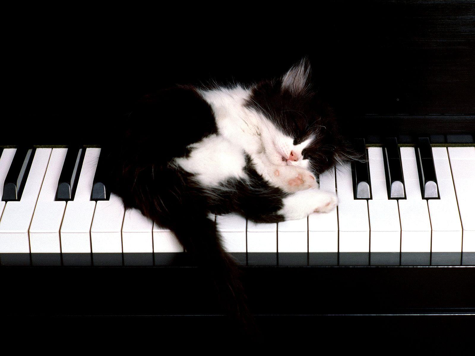 http://2.bp.blogspot.com/-ze_OLDym5IA/T0rDNvzD5PI/AAAAAAAABnI/z8O64vPHV3c/s1600/Cats%2BLove%2BMusic%2BAnimals%2BPlay%2Bat%2BPiano59.jpg
