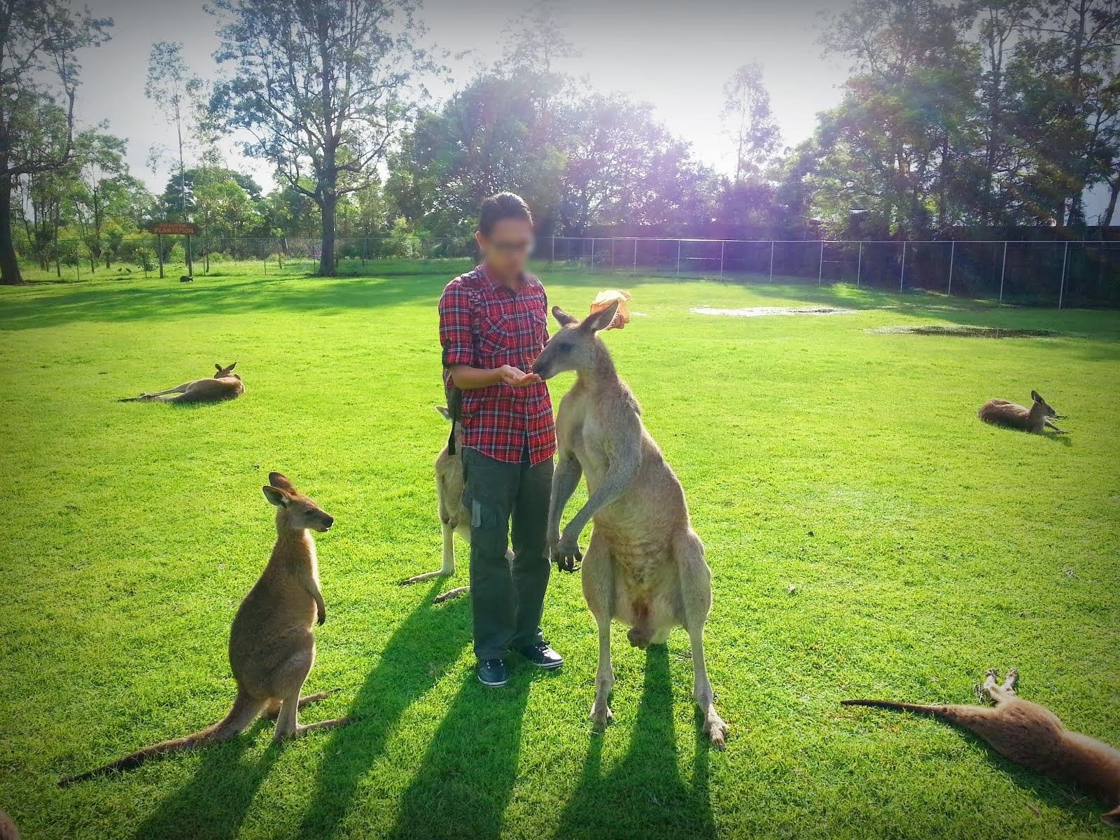 Lone Pine Koala Sanctuary, Brisbane Australia