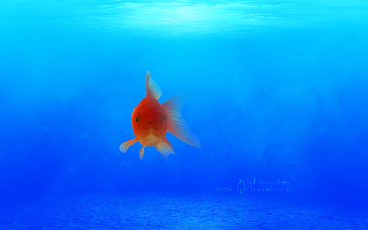 life under sea water essay Essays - largest database of quality sample essays and research papers on life under sea.