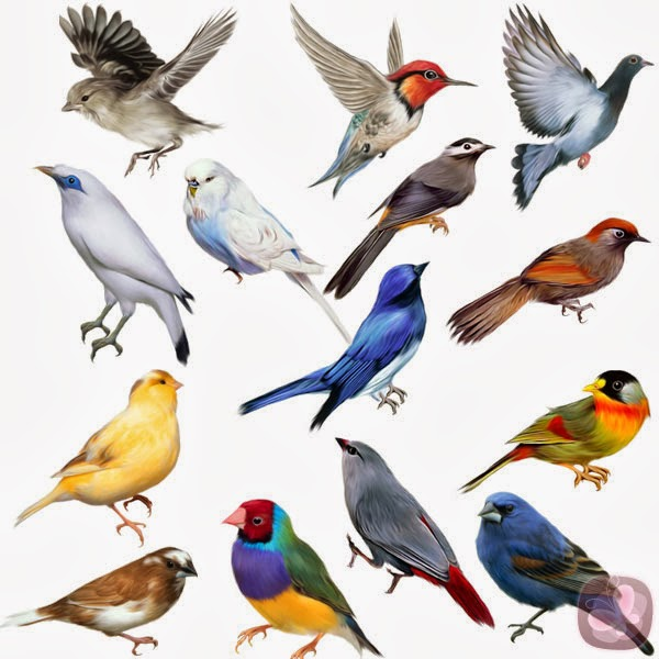 Animales Aéreos