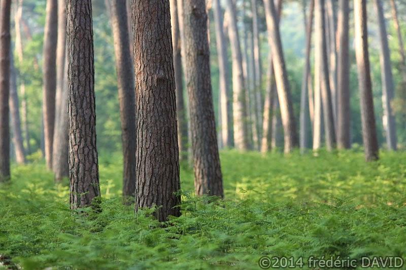 nature arbres fougères forêt Fontainebleau Seine-et-Marne