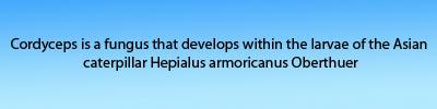 cordyceps that develops within,cordyceps unilateralis