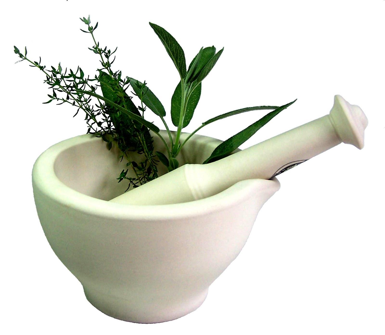 Hierbas medicinales durante el embarazo mujer for Hierbas y plantas medicinales