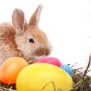 Zeko i jaja, Uskrs download besplatne slike pozadine za mobitele