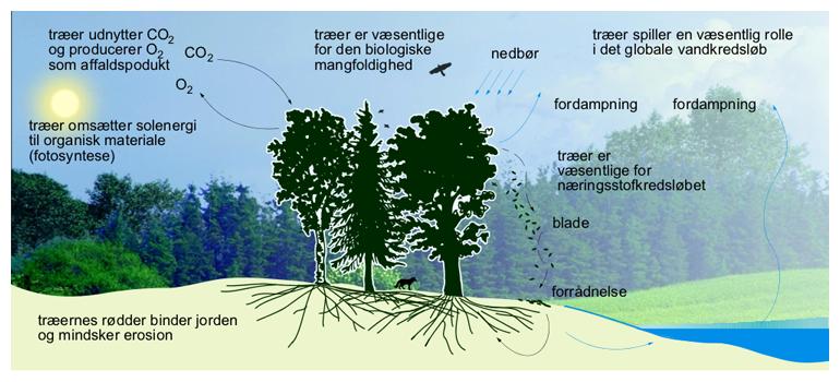 hvorfra kommer det sukker som træet bruger