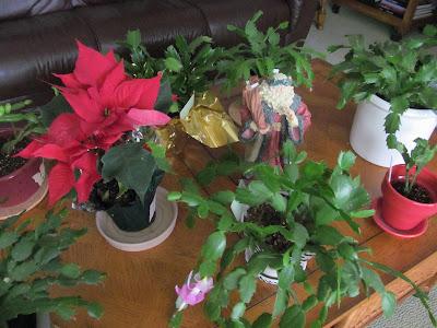 http://2.bp.blogspot.com/-zgVPyWMFW50/VnzGEDH4jRI/AAAAAAAAcXA/Pz7Ktod5qMU/s400/Santa%2Bin%2Bthe%2Bgarden.jpg