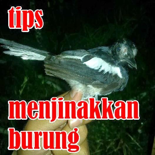 http://ilmukicau.blogspot.com/p/blog-page_9417.html