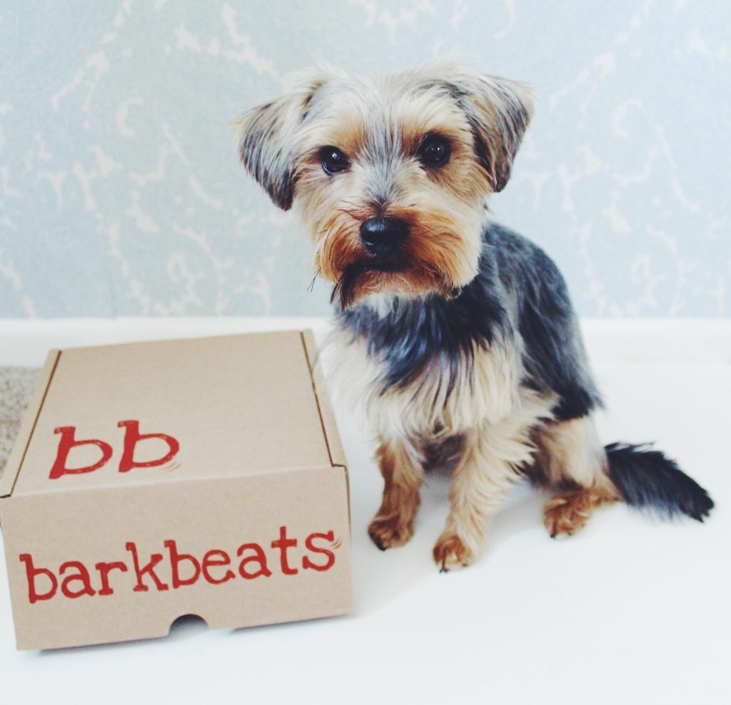 subscriptionbox, subscriptionboxfordogs, dogtreats, yorkshireterrier, barkbeats, barkbeatssubscriptionbox, barkbestareview