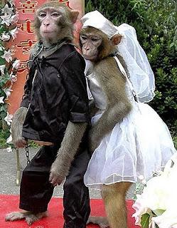 gambar unik monyet bersanding