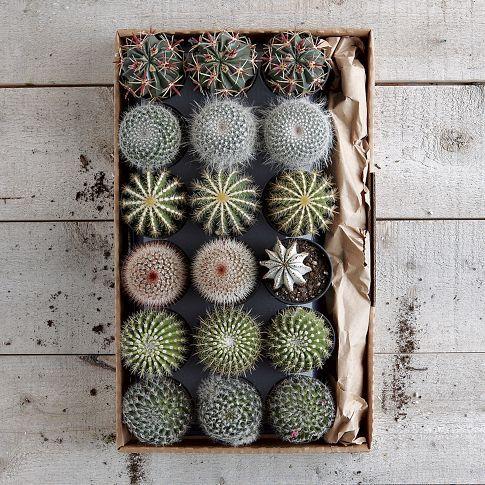 caixa para suculentas de madeira