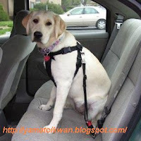 Contoh belt untuk anjing