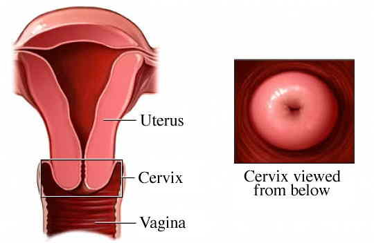 What Does Your Cervix Look Like