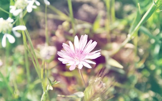 Hình ảnh hoa cỏ mùa xuân cho máy tính