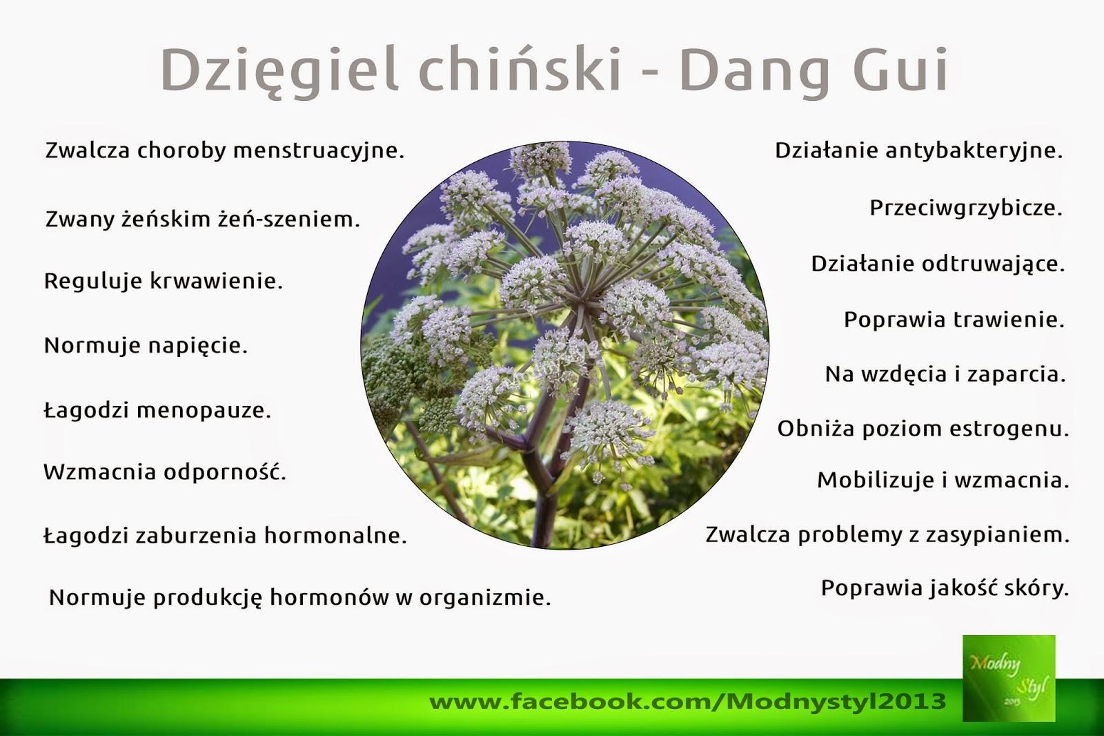 Dzięgiel chiński czyli Dang Gui