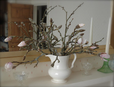 A mantlepiece arrangement of forced magnolia flowers in a cream coloured jug showing the closed buds and some buds coming into flower
