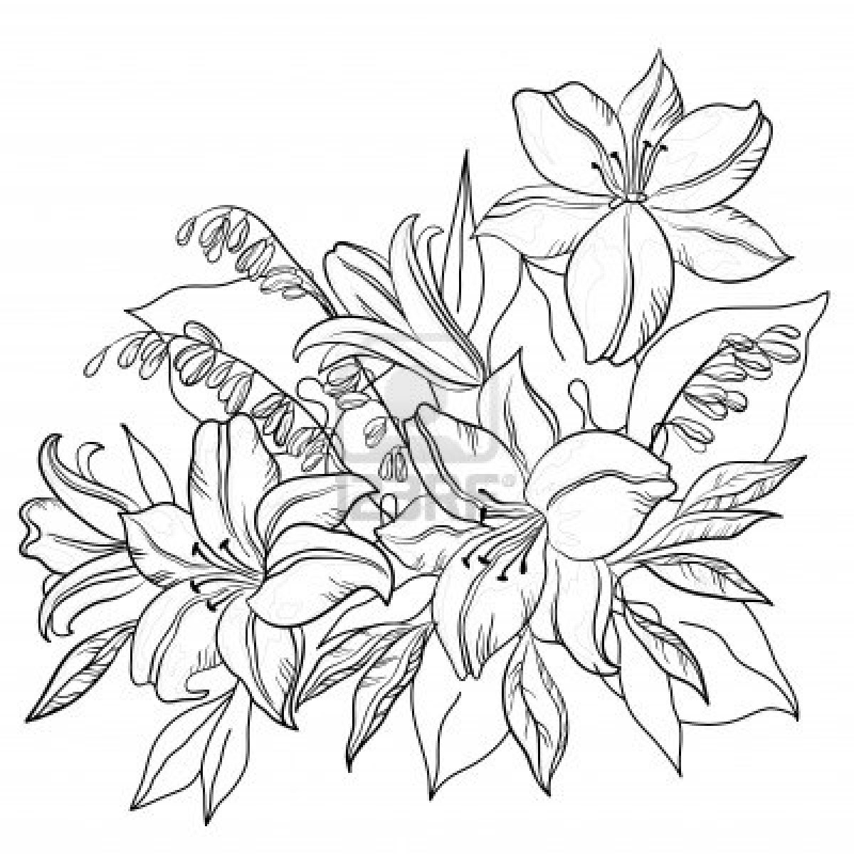 Black Line Flower Drawing : Sunbeamflowers flowers outlines