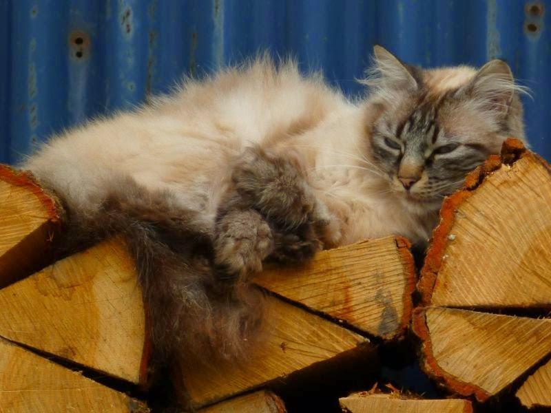 The nap...