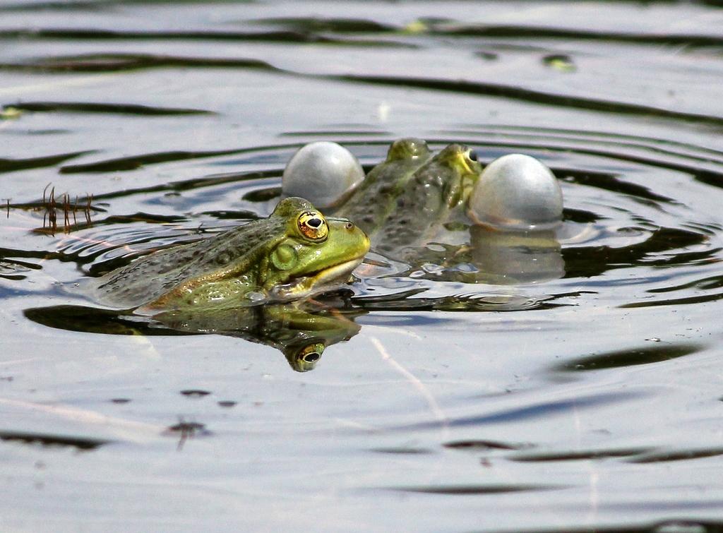 Pfotengangs welt nicht jeder frosch ist ein prinz - Bilder von gartenteichen ...
