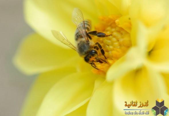 العلاج بمنتجات النحل