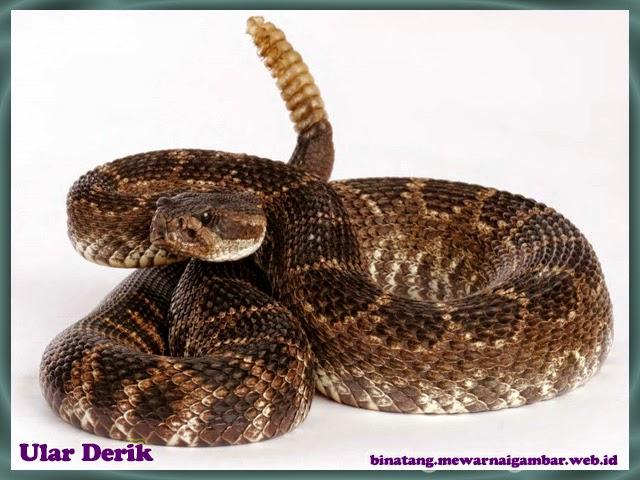 gambar ular derik