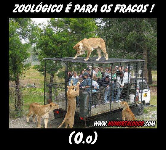 Motivacional: Zoológico é para os fracos...