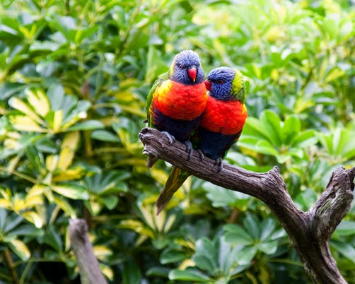 'Beautiful pair of birds sitting on the tree'