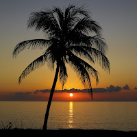 Daniel Chavez Moran Palm Tree