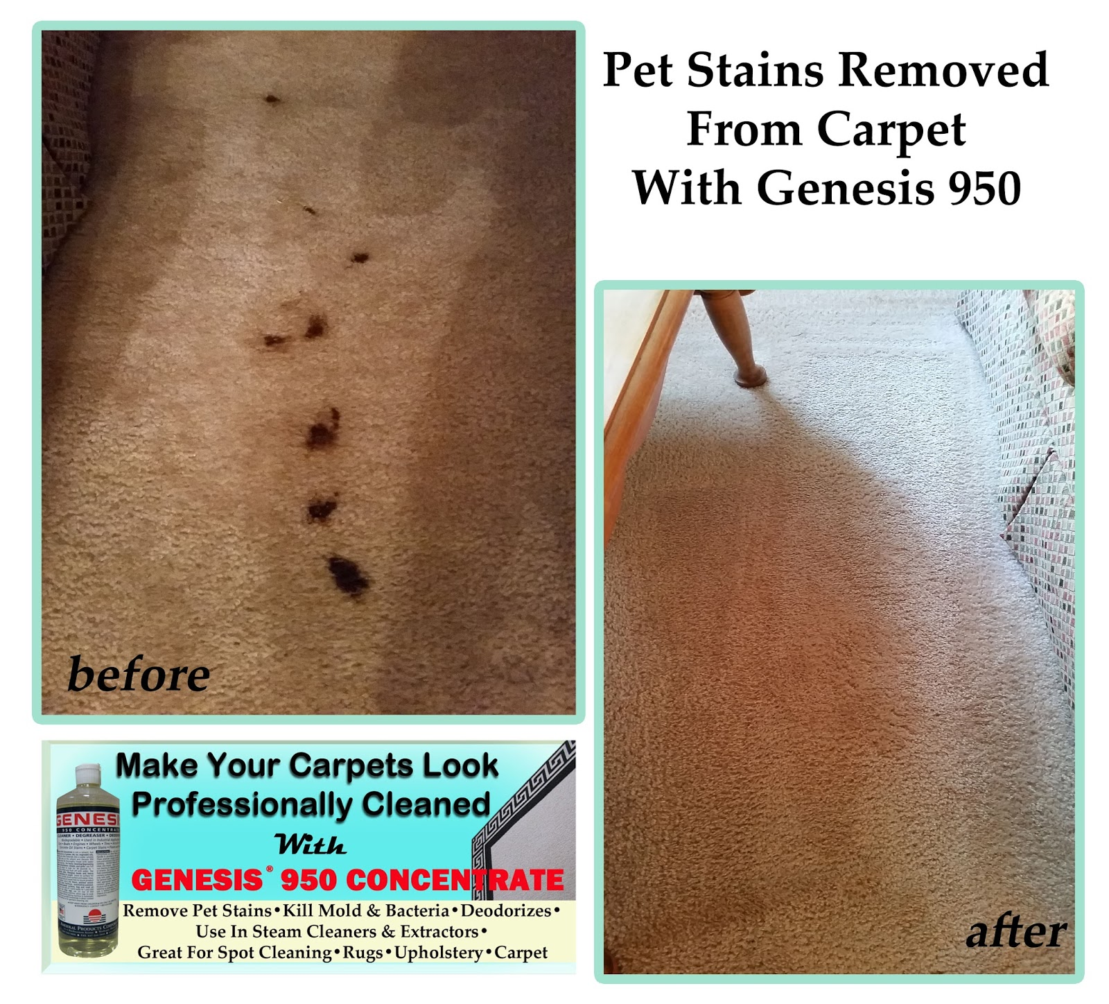 Best pet stain remover for pet stains and pet odor best pet stain remover how to remove pet - Remove carpet stains ...