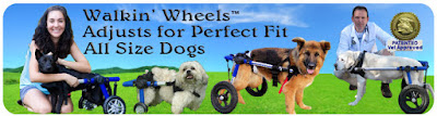 Dog Wheelchiar