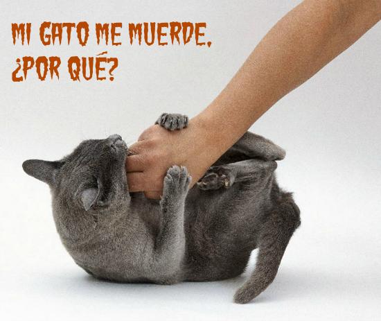 gato-mordiendo
